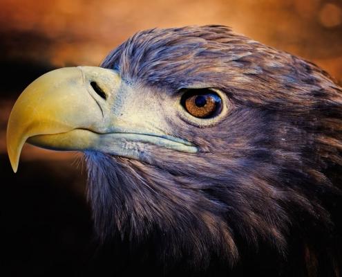 Das Sternbild des Adlers