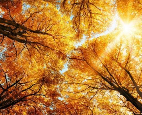 Bäume und ihre Magie