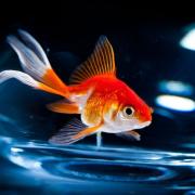 Das Sternbildzeitalter der Fische