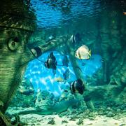 Der Mythos um Atlantis