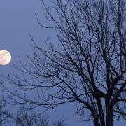 Haariges Thema? Der Mondkalender hilft weiter!