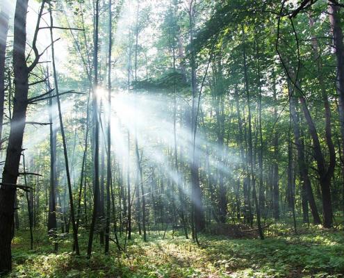 Die Alraune: Mystische Kraft in menschlicher Form