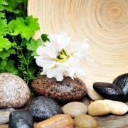 Die Wirkung der Pflanzen im Feng Shui