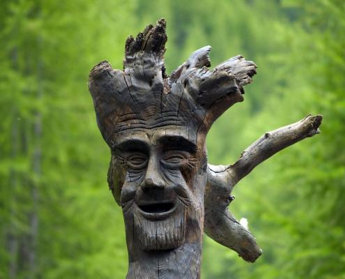 Drehwüchsige Bäume und ihre besondere Bedeutung