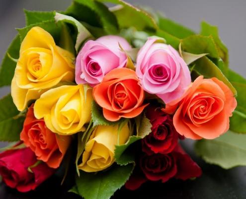Die Farbe der Rose und ihre Bedeutung