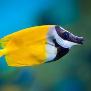 Traumdeutung: Fisch