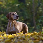 Krafttiere: Der Hund