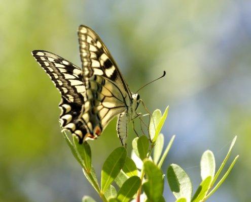Traumdeutung: Insekten