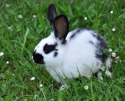 Krafttiere: Das Kaninchen
