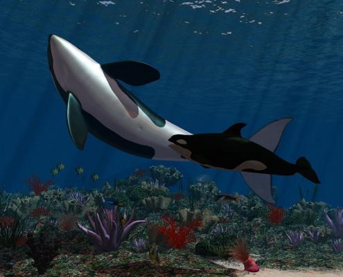 Krafttiere: Der Orca