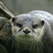 Das Horoskop der Indianer: Der Otter