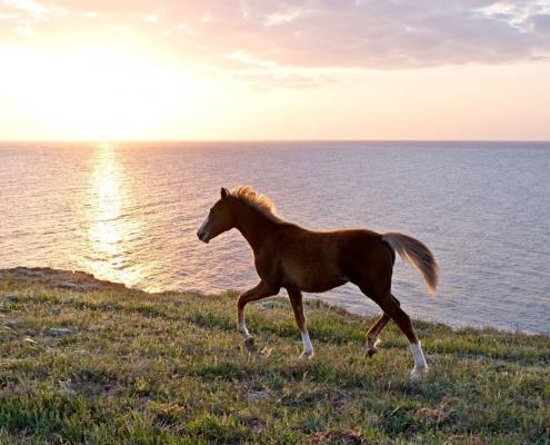 Krafttiere: Das Pferd
