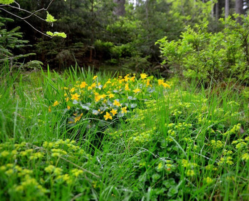 Pflanzen kommunizieren mit unserem Unbewussten