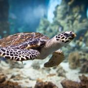 Traumdeutung: Schildkröte