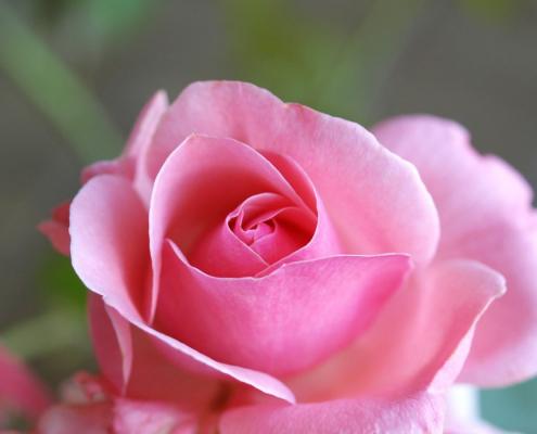 Traumdeutung: Blumen
