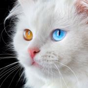 Das Traumsymbol Katze – Was sagt es uns?